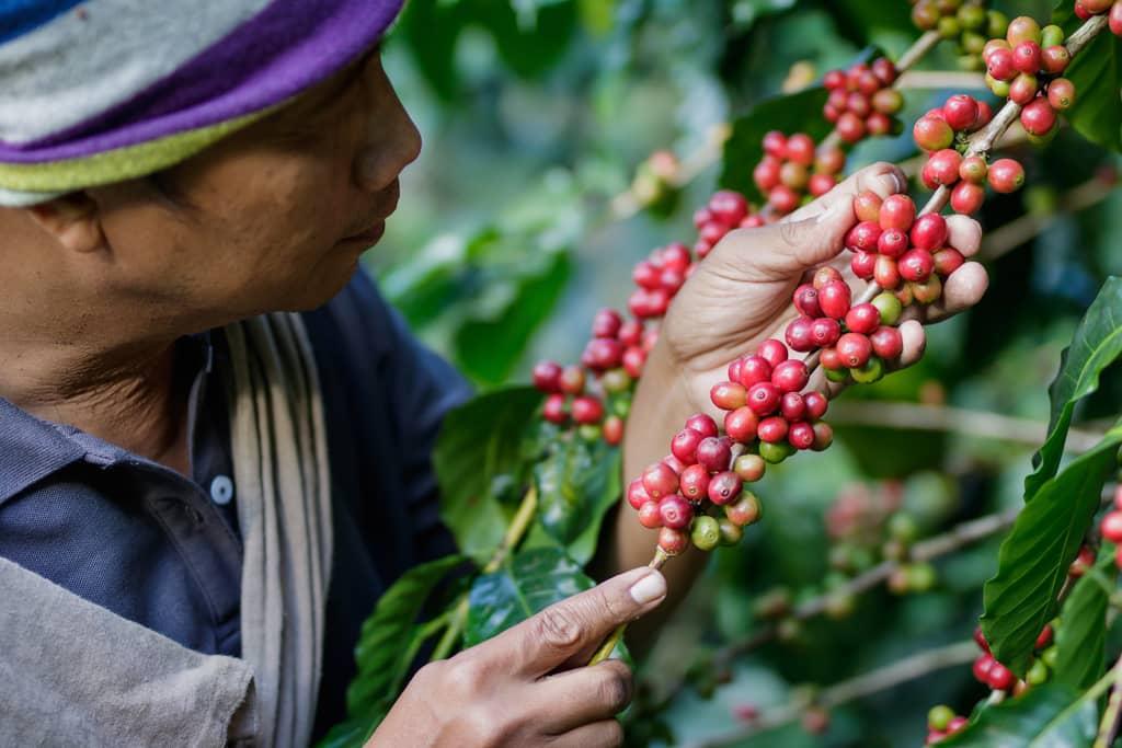 8-kaffeplantage-kalibaru